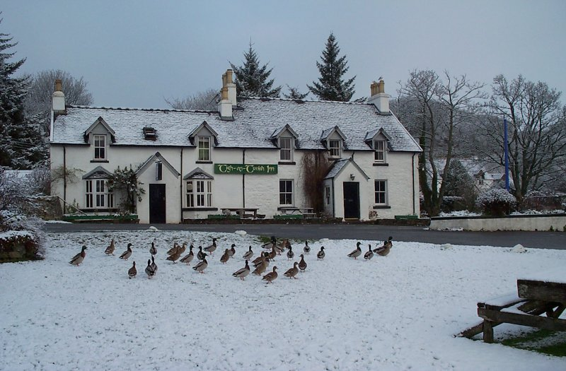 Pub ducks in the snow